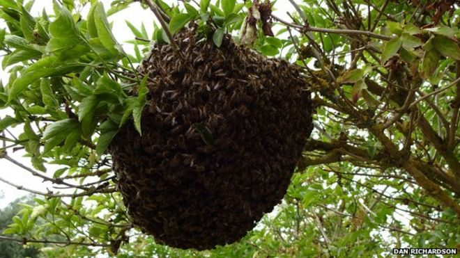 Bee Swarm At Woodston Ponds