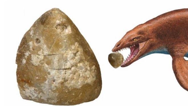 Drawing of a marine predator biting on a sea urchin