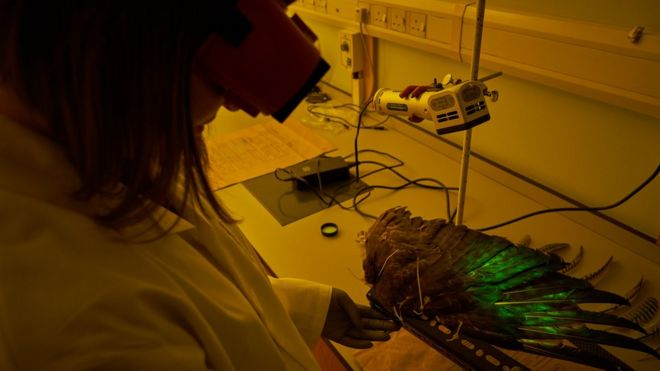 Analysing a feather with green magnetic fluorescent powder