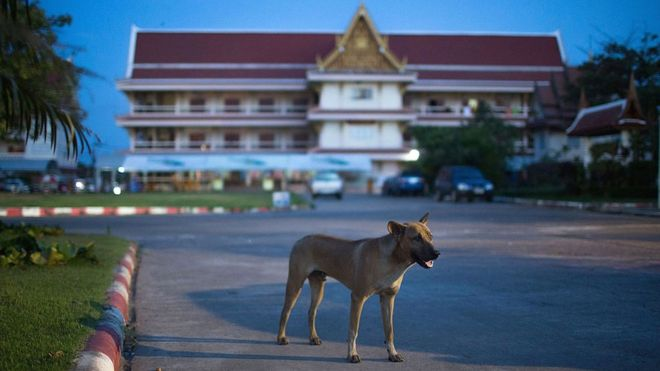 Thailand rushes to contain rabies outbreak - BBC News