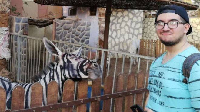 dc655cafb Egypt zoo accused of painting donkey to look like a zebra - BBC News