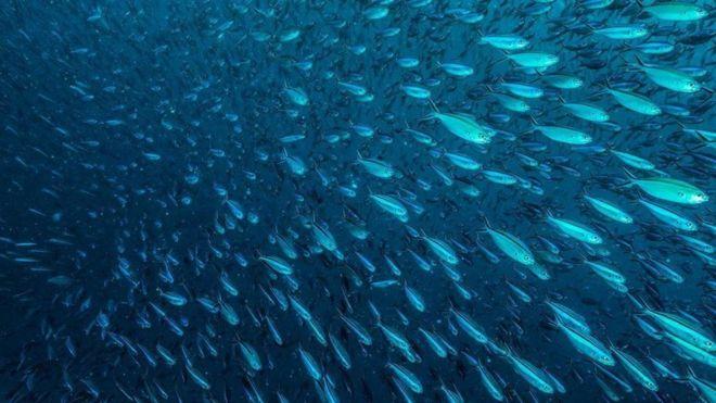 Hasil gambar untuk ikan