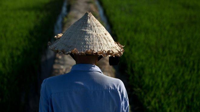 Nông thôn Việt Nam