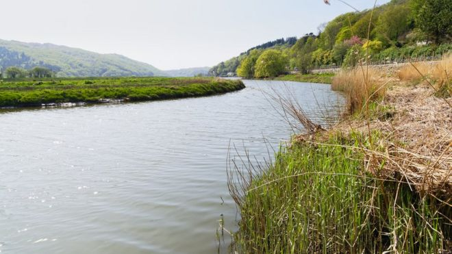 Brexit: Farmers could be paid to protect the environment