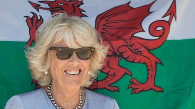 Duchess of Cornwall visits rare shire horses