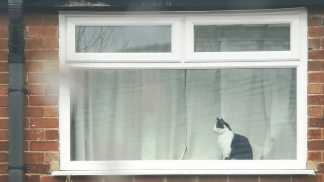 Neighbors Ask Cat's Name Across the Street