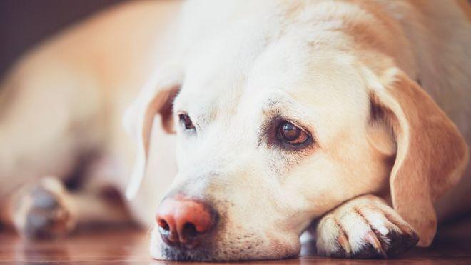 Illegal dog breeders warned after £200k fine - BBC News