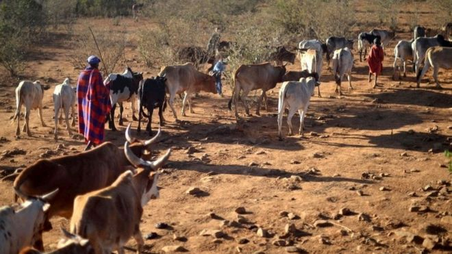 Image result for images of drought in kenya