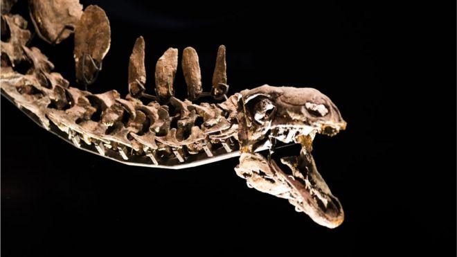 стегозавр, копия скелета