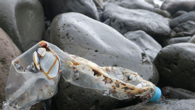 Atılan plastik şişe (Resim: Peter Ryan)