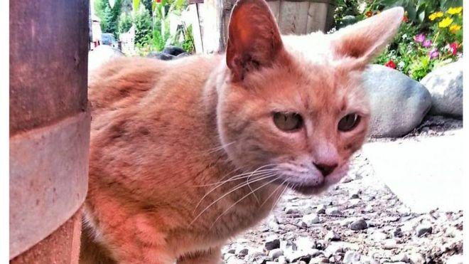 Помер кіт, який 20 років був мером містечка на Алясці