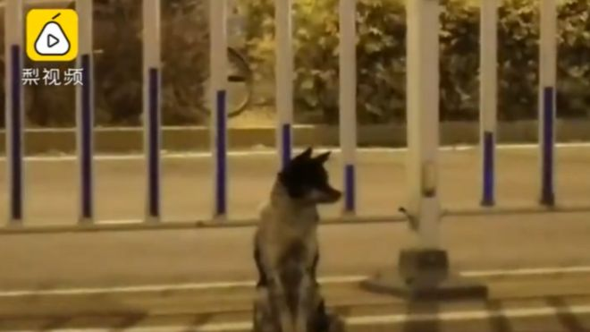 La tierna historia del perro que lleva más de 80 días en la misma carretera en la que murió su dueña