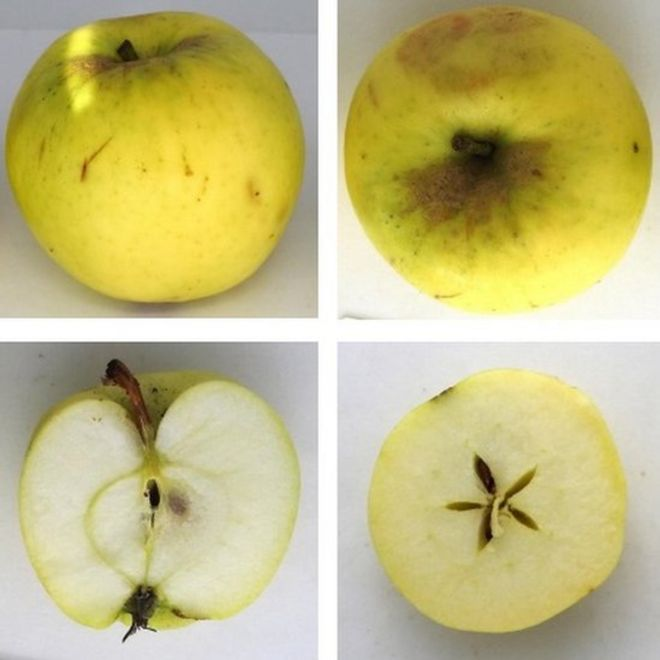 Four different views of the apple, including a look inside a cut apple, showing its core