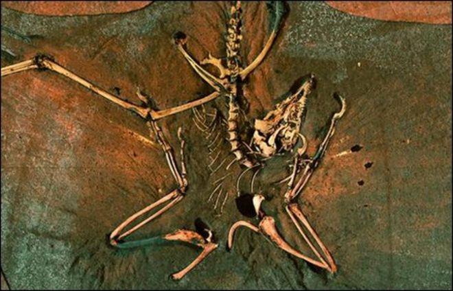 Археоптерикс (Вогелиус)