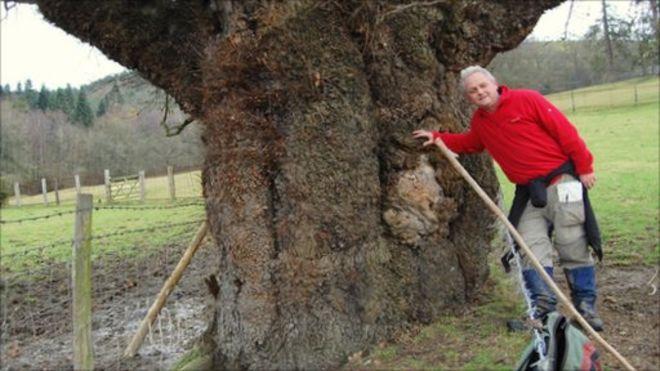 Роб Макбрайд с гигантским дубом в Кингсвуде, Уэлшпул