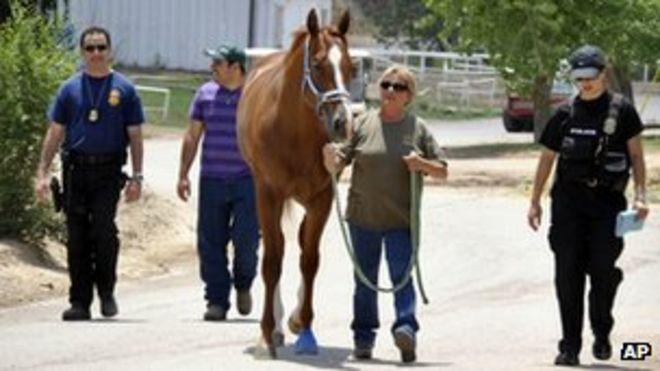 Сотрудники правоохранительных органов забирают лошадь из конюшни на ипподроме Руидозо-Даунс