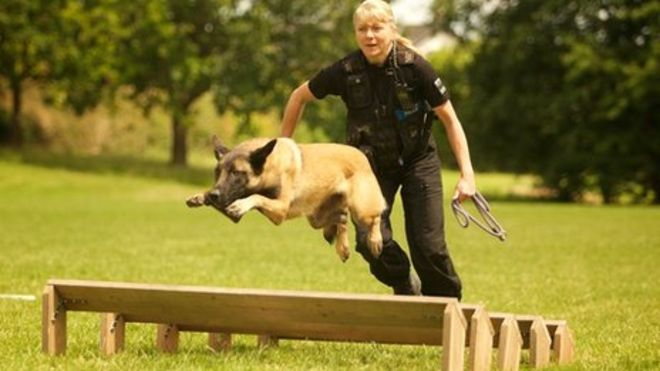 Training Police Dogs