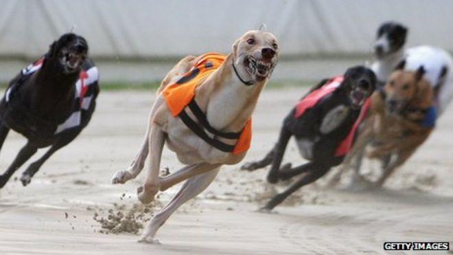 Professional greyhound gambling casino casino directory gambling online
