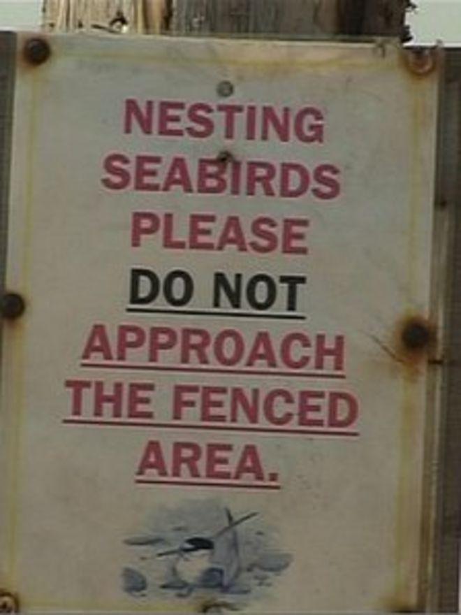 Уведомление о гнездовании морских птиц в Кримдоне