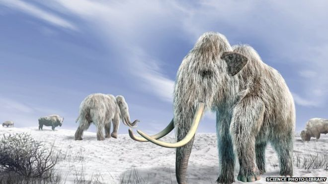 Woolly Mammoth vs. Tyrannosaurus rex | The World of Animals