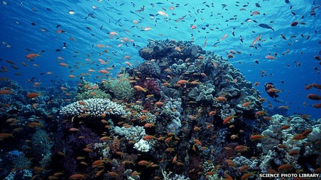 Image Caption Corals Are Likely To Suffer As A Result Of The Changes To Our Oceans
