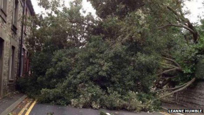 Упавшее дерево, Бридженд