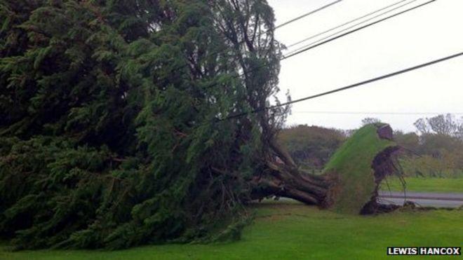 Дерево выкорчевано в Пендине в Кармартеншире
