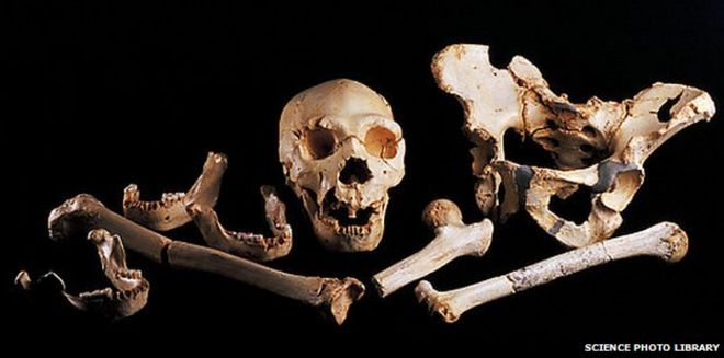 leg bone gives up oldest human dna - bbc news, Human body