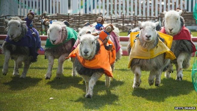 Ewe what? 10 things you may not know about sheep - BBC News