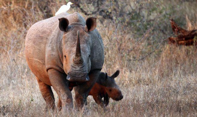 Белые слоны в Южной Африке