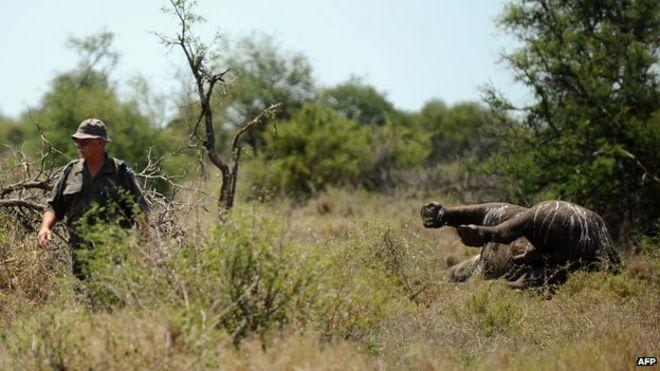 Носорог убит браконьерами