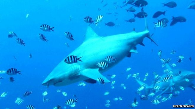 Can science stop sharks attacking humans? - BBC News