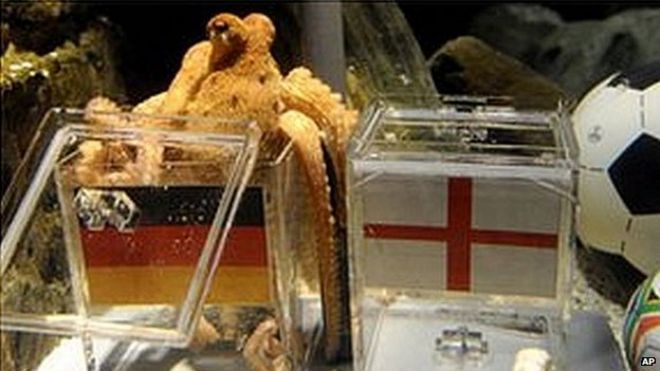 Image result for world cup animal predictions