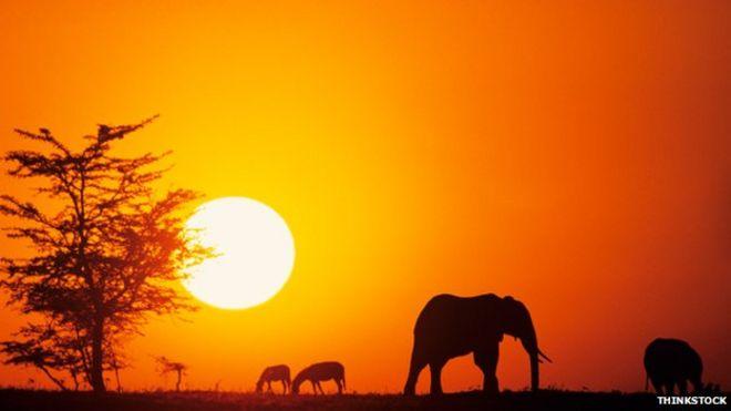Слоны вырисовываются в Кении