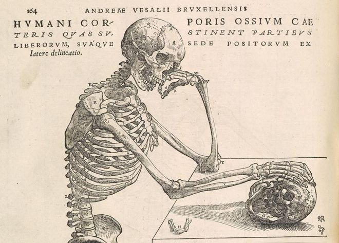 dd77134f31 Wood cut print from the Fabrica - 16th Century medical book by Andreas  Vesalius