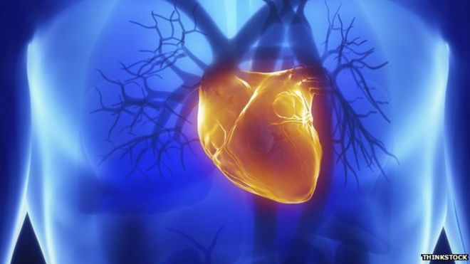 Protein structure \'holds key to heart muscle disease\' - BBC News