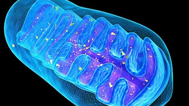 Resultado de imagem para mitocondria 3d