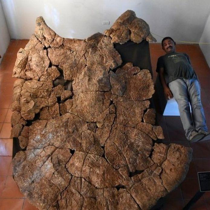 Penemuan Fosil Kura kura sebesar mobil