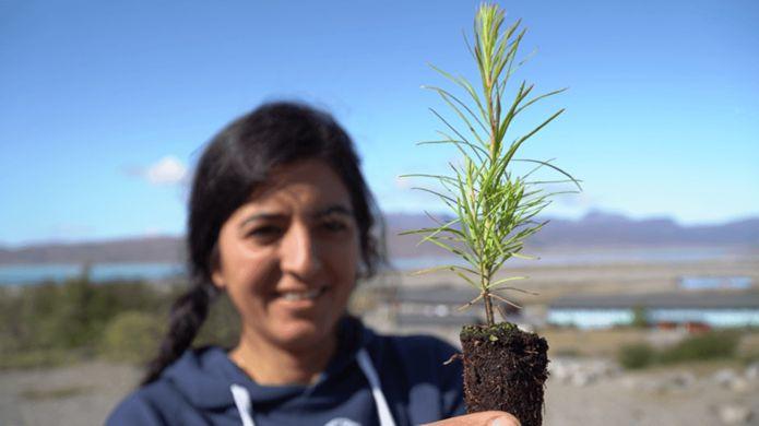 Доктор Фазих Ник высаживает деревья у Нарсарсуака