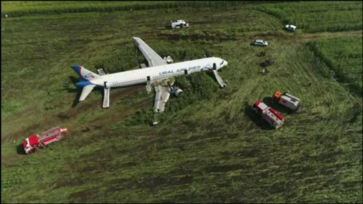 Russia bird strike: Collision with gulls forces plane to land in field