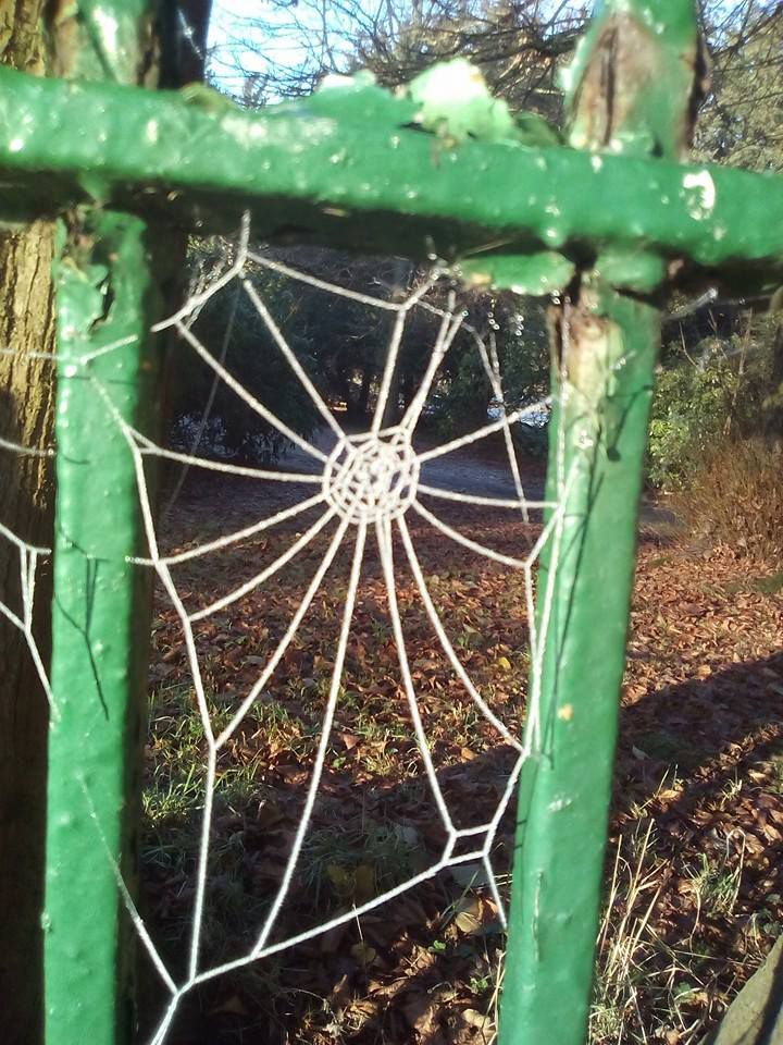 Frosted spider's web
