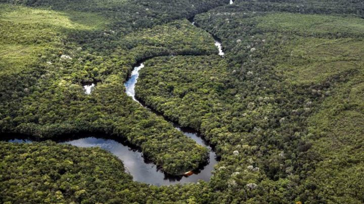 Former Farc rebels become eco-warriors to stop deforestation in the Amazon