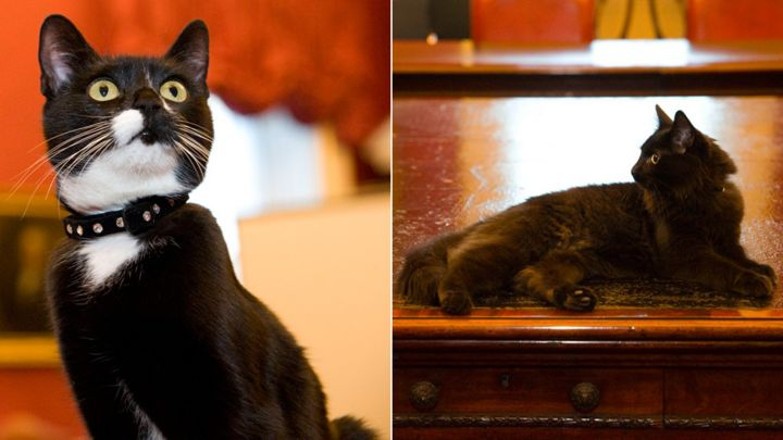 cabinet office cats evie and ossie join whitehall mousers - bbc news