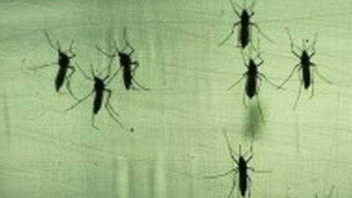 Tackling Brazil's Zika virus crisis