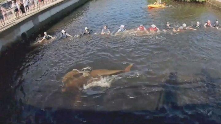 Golfinhos presos em canal são salvos por corrente humana nos EUA