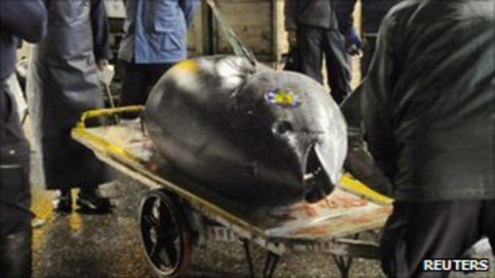 japan new year tuna sale sets price record bbc news