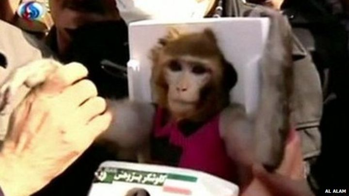 Iran 'sends monkey to space for second time'