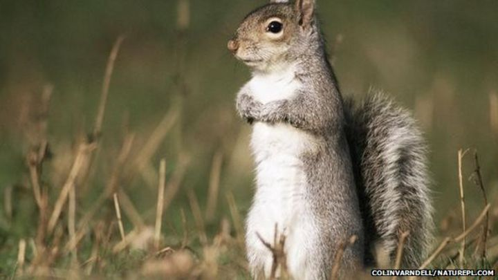 Old Dalby pie maker under fire over squirrel meat fillings - BBC News