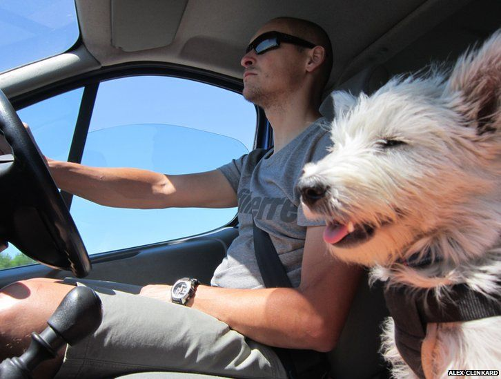 Driver and dog in car