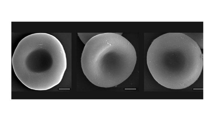 От живой клетки до киборга - всего одна промежуточная стадия